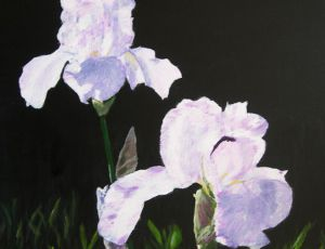 Midnight Irises