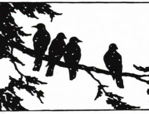Crows in Winter
