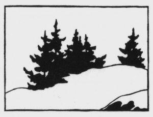 Spruces & Snow