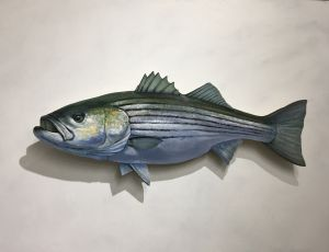 Striped Bass by Timothy Ering