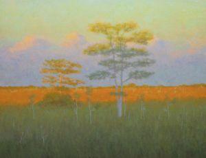 Sawgrass Prarie