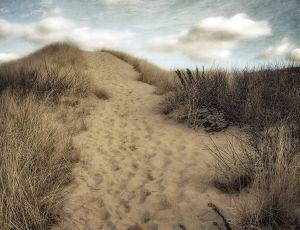A Walk to the Seashore (#2/3)